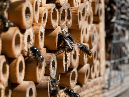 Mason bees at an insect hotel in spring Фото со стока
