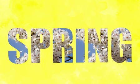 suave: Spring text written with blooming white flowers and blue sky over yellow background