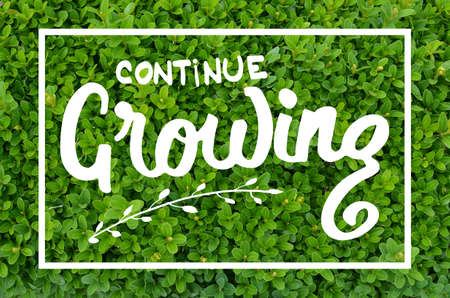 continue: Continue growing hand lettering motivational message on natural green background