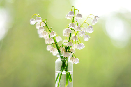 Whites flowers in a vase on bokeh background with sunlight pattern. Postcard concept.