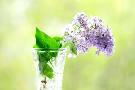 Lilac in a vase on bokeh background with sunlight pattern. Postcard concept.
