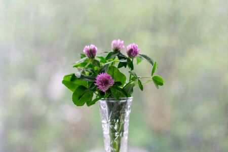 Flowers in a vase on bokeh background with sunlight pattern. Postcard concept.