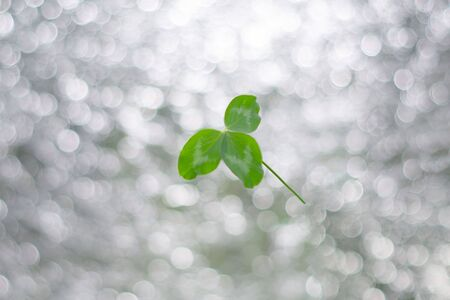 Clover leaf on silver bokeh background. St.Patrick 's Day.