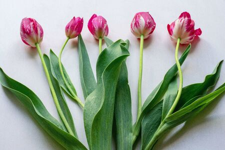 Bouquet of five flowers of tulips on a white background