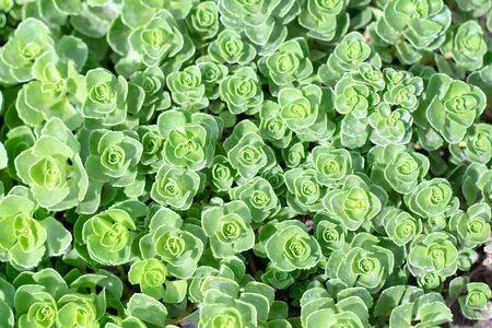 Rectangular arrangement of succulents. Cactus succulents in planter.