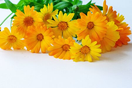 A bouquet of marigold flowers on a white background 免版税图像