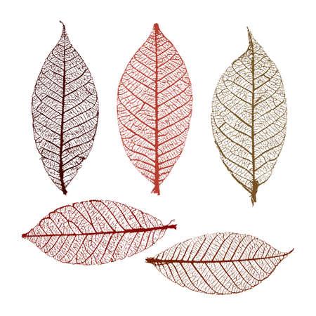 Skeleton leaves set for your design 向量圖像