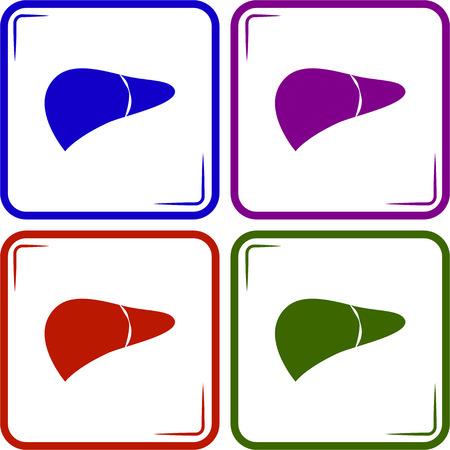 bile: Liver icon