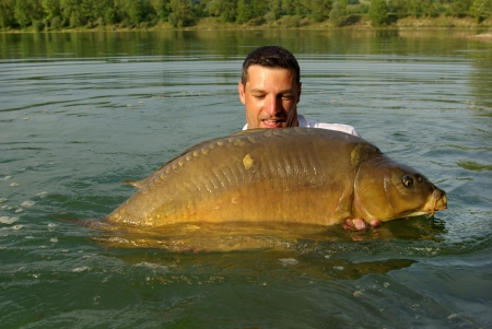mirror carp: Catch and release - Happy  fisherman holding a giant mirror carp Stock Photo