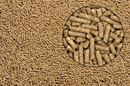 animal feed: Close-up on animal food with magnifying glass Stock Photo