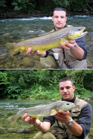 Catch of fish - Large brown trouts photo