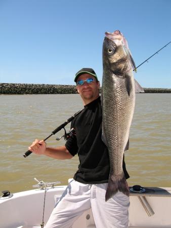 atrapar: Lucky pescador que sostiene una lubina grande