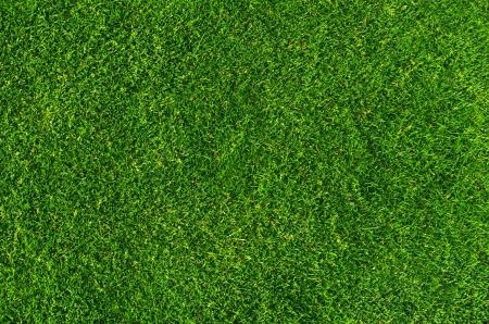 天然芝のテクスチャにクローズ アップ