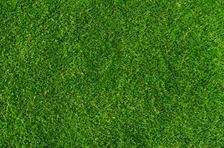 Close-up on natural lawn texture Stock Photo