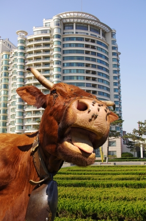Funny cow sticking out tongue with building in background