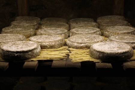Traditional refining of Saint Nectaire cheeses in a cellar. Puy de dome, Auvergne, France