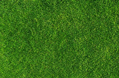 Lawn background, stadium. Close-up on natural lawn