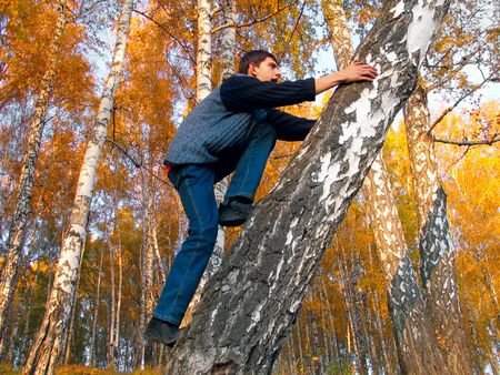 The boy gets on a birch in an autumn forest