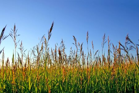 High grass in the sunset light Stock Photo - 5372778