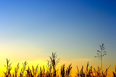 grass in the sunset light Stock Photo - 6433420