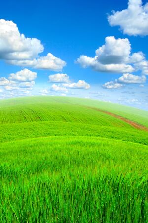 over hill: nature background with fresh grass and sky