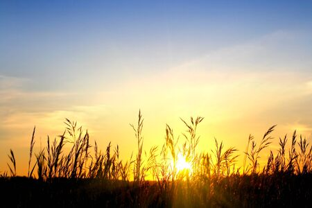 grass in the sunset light Stock Photo - 7185779