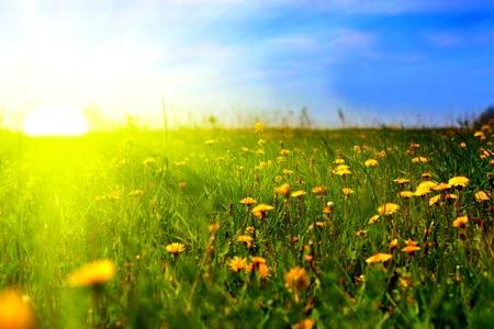 포 그라운드에서 민들레와 아름 다운 여름 풍경