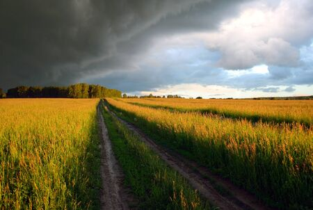 evening summer landscape with field and dramatic sky Stock Photo - 10232737