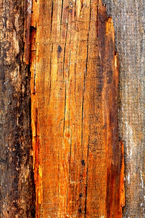 Wood Texture for background Stock Photo - 10355143