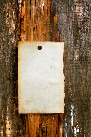 blank paper hanging on the wooden background Stock Photo - 10355146
