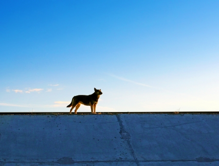 A Dog silhouette on the evening Sky background photo