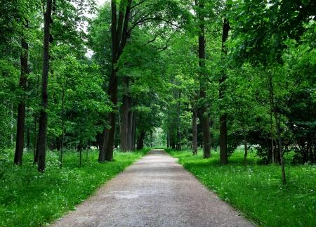아름다운 여름 숲의 경로 차선