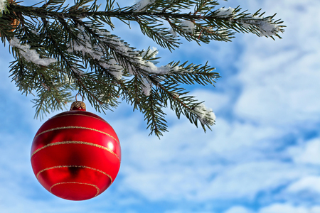 Christmas decoration red glass ball on fir branches outdoor photo