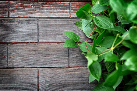 Green Leaves on the Wooden Background photo