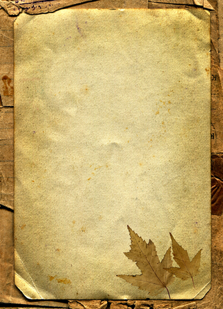 yellowed: Autumnal Leaf on the Old Paper Background Stock Photo
