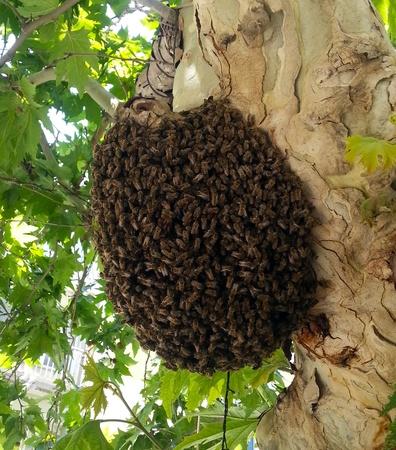 miele le api