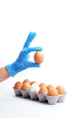 food safety: eggs review