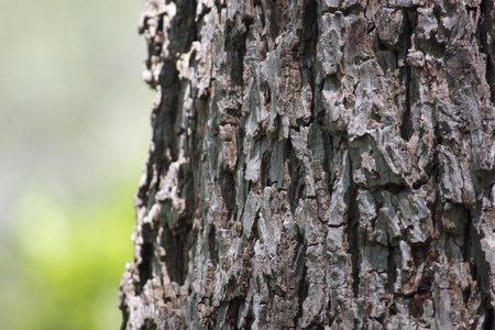 Close-up view of the textured bark of an old tree. photo