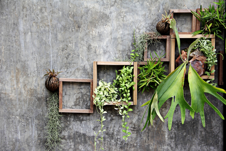 wall decoration: wood frame with some plant on the wall decoration