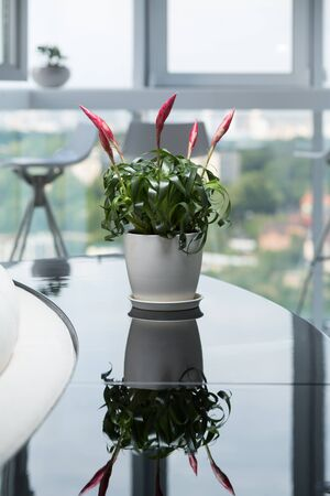 A beautiful plant in the interior of a modern apartment or office. Green interior decoration. Stock Photo