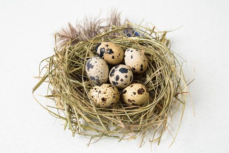 Easter quail eggs in the nest. gretting card for Easter holidays. On white background Stock Photo