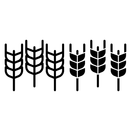 Spikelets of wheat line and glyph icon. Agriculture vector illustration isolated on white. Grain outline style design, designed for web and app. 写真素材