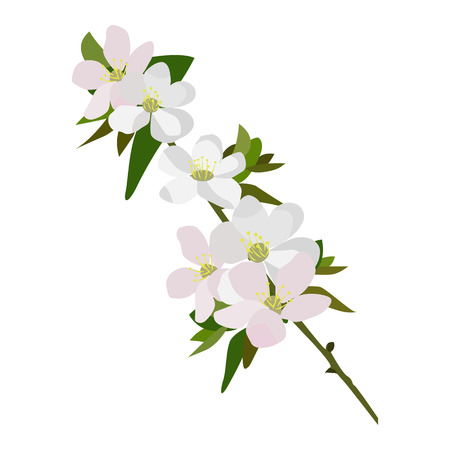 Apple blossom vector icon on a white background. Flowers on a branch illustration isolated on white. Floral realistic style design, designed for web and app. Eps 10. Vector Illustration