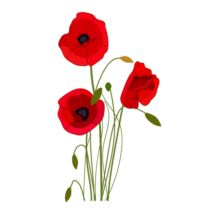 Poppies vector icon on a white background. Flower illustration isolated on white. Wildflowers realistic style design, designed for web and app. Eps 10.