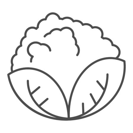 Cabbage thin line icon. Vegan food vector illustration isolated on white. Vegetable outline style design, designed for web and app. Eps 10.  イラスト・ベクター素材