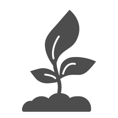 Young seedling with three leaves solid icon, Agriculture concept, Sprout symbol on white background, growing plant icon in glyph style for mobile concept and web design. Vector graphics.
