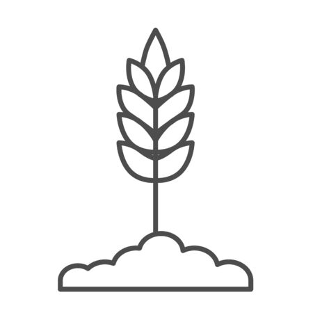 Wheat spikelet thin line icon, organic concept, Spica sign on white background, Wheat ear icon in outline style for mobile concept and web design. Vector graphics.