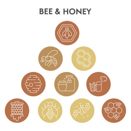 Modern honey bee Infographic design template. Organic natural honey products Infographic visualization in bubble design on white background. Creative vector illustration for infographic
