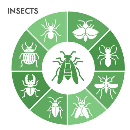 Modern Insects Infographic design template. Bugs and beetles Infographic visualization in bubble design on white background. Insects template for presentation. Creative vector illustration. Ilustracja