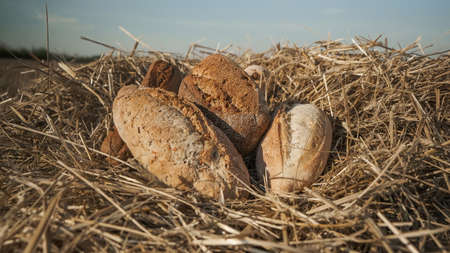 Loaves of different types of bread in wheat field. Homemade baking concept. Fresh baked bread on hay and sky background. Wheat loaf on beveled spikelets. Assortment of bread concept. Stok Fotoğraf